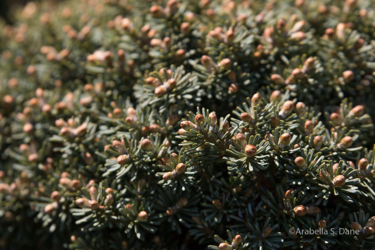 Plantipedia Plants